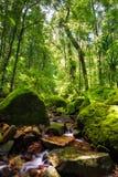 Τροπικό δάσος Masoala Στοκ Εικόνες