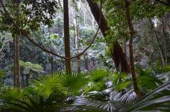 Τροπικό δάσος understory Στοκ Φωτογραφία