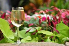 τροπικό άσπρο κρασί Στοκ Εικόνες