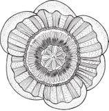 Τροπικό απομονωμένο διάνυσμα στοιχείο mandala λουλουδιών Στοκ Φωτογραφίες