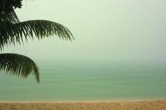 Τροπικό ασιατικό τοπίο βροχής με τον ωκεάνιο φοίνικα Στοκ φωτογραφία με δικαίωμα ελεύθερης χρήσης