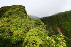 τροπικό δάσος Άγιος Kitts Στοκ εικόνα με δικαίωμα ελεύθερης χρήσης