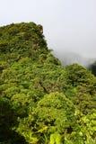 τροπικό δάσος Άγιος Kitts Στοκ Φωτογραφίες