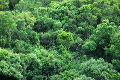 τροπικό δάσος ανασκόπησης στοκ φωτογραφία