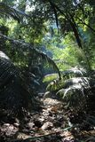 Τροπικό δάσος - ζούγκλα σε Goa Στοκ φωτογραφία με δικαίωμα ελεύθερης χρήσης
