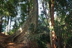 Τροπικό δάσος - ζούγκλα σε Goa Στοκ εικόνα με δικαίωμα ελεύθερης χρήσης