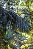 Τροπικό δάσος - ζούγκλα σε Goa Στοκ φωτογραφίες με δικαίωμα ελεύθερης χρήσης