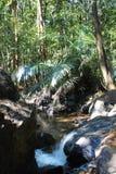 Τροπικό δάσος - ζούγκλα σε Goa Στοκ Εικόνες