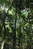 Τροπικό δάσος - ζούγκλα σε Goa Στοκ Φωτογραφίες