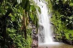 Τροπικό τροπικό δάσος Κόστα Ρίκα καταρρακτών Στοκ φωτογραφίες με δικαίωμα ελεύθερης χρήσης