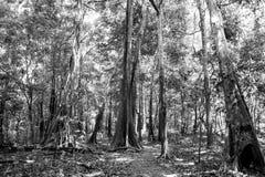 Τροπικό τροπικό δάσος μέσα στο Manaus, Βραζιλία Δέντρα με τα πράσινα φύλλα στη ζούγκλα Θερινό δάσος στο φυσικό τοπίο Φύση στοκ εικόνες
