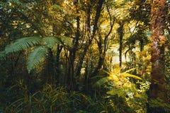 Τροπικό δάσος με τις φτέρες, Νήσος Ρεϊνιόν στοκ φωτογραφίες με δικαίωμα ελεύθερης χρήσης