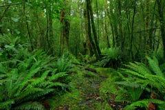 τροπικό δάσος μονοπατιών Στοκ Φωτογραφία