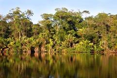 τροπικό δάσος πλευρών rican στοκ φωτογραφία