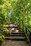 τροπικό δάσος σκαλοπατ&iota Στοκ Φωτογραφία