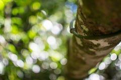 Τροπικό τροπικό δάσος στην Αυστραλία Στοκ φωτογραφία με δικαίωμα ελεύθερης χρήσης
