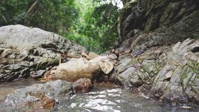Τροπικό δάσος στη ζούγκλα και άποψη σχετικά με τη λίμνη από τον καταρράκτη κίνηση αργή 3840x2160 απόθεμα βίντεο