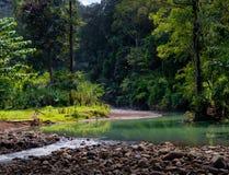 Τροπικό δάσος στο Βιετνάμ με το ρεύμα και την πέτρα στοκ φωτογραφίες με δικαίωμα ελεύθερης χρήσης