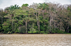 τροπικό δάσος του Παναμά τ&o Στοκ Εικόνες