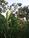 τροπικό δάσος τροπικό στοκ φωτογραφία με δικαίωμα ελεύθερης χρήσης