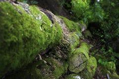 τροπικό δάσος Στοκ Φωτογραφίες