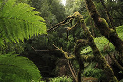 τροπικό δάσος Στοκ φωτογραφία με δικαίωμα ελεύθερης χρήσης