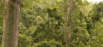 τροπικό δάσος στοκ φωτογραφίες με δικαίωμα ελεύθερης χρήσης