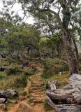 Τροπικό ενδημικό δάσος, Νήσος Ρεϊνιόν στοκ εικόνα με δικαίωμα ελεύθερης χρήσης
