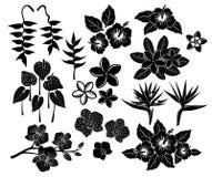 Τροπικό εξωτικό σύνολο σκιαγραφιών λουλουδιών Στοκ φωτογραφία με δικαίωμα ελεύθερης χρήσης