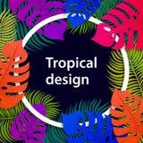 Τροπικό ζωηρό σχέδιο πλαισίων φύλλων Θερινό τροπικό σχέδιο με τα εξωτικά φύλλα φοινικών Monstera, φοίνικας, φύλλα μπανανών εξωτικ ελεύθερη απεικόνιση δικαιώματος