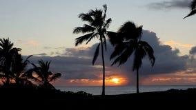 Τροπικό ηλιοβασίλεμα πέρα από τον ωκεανό με τους φοίνικες απόθεμα βίντεο