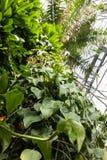 Τροπικό θερμοκήπιο με τις πράσινες εγκαταστάσεις στοκ φωτογραφία με δικαίωμα ελεύθερης χρήσης