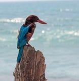 τροπικό διάνυσμα απεικόνισης πουλιών φωτεινό Στοκ Εικόνες