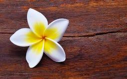 τροπικό διάνυσμα shri plumeria περιδεραίων lanka της Ινδονησίας απεικόνισης της Χαβάης frangipani λουλουδιών του Μπαλί Στοκ Εικόνες