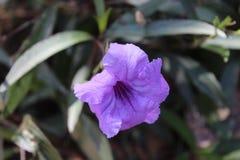 Τροπικό λουλούδι στοκ φωτογραφία