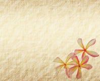 Τροπικό λουλούδι Frangipani ή plumeria Στοκ Εικόνες