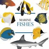 Τροπικό ναυτικό συλλογής ψαριών Στοκ Εικόνες