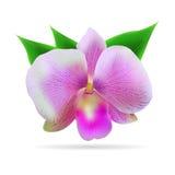 Τροπικό λουλούδι με τα φύλλα Στοκ εικόνες με δικαίωμα ελεύθερης χρήσης