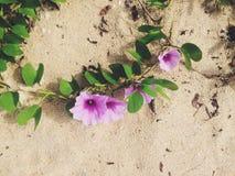 Τροπικό λουλούδι στην παραλία Στοκ Εικόνες