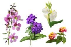 Τροπικό λουλούδι συστάδων Στοκ Εικόνες
