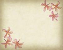 Τροπικό λουλούδι Frangipani ή plumeria με το παλαιό grunge Στοκ Φωτογραφίες