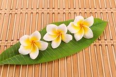 Τροπικό λουλούδι Plumeria Στοκ φωτογραφίες με δικαίωμα ελεύθερης χρήσης