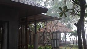 Τροπικό πάρκο στο βροχερό καιρό απόθεμα βίντεο