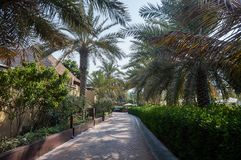 Τροπικό πάρκο στο Ντουμπάι κόκκινα ψηλά τρία δέντρα φοινικών οάσεων ερήμων Στοκ Φωτογραφίες