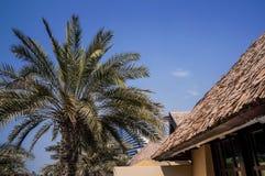 Τροπικό πάρκο στο Ντουμπάι κόκκινα ψηλά τρία δέντρα φοινικών οάσεων ερήμων Στοκ Εικόνα
