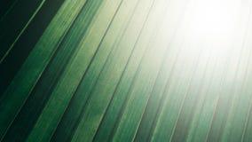 Τροπικό πράσινο υπόβαθρο σύστασης φύλλων καρύδων, σκοτεινός τόνος με το s στοκ εικόνες