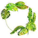 Τροπικό πλαίσιο φοινίκων φύλλων της Χαβάης σε ένα ύφος watercolor που απομονώνεται διανυσματική απεικόνιση