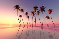 Τροπικό ροζ ηλιοβασιλέματος ελεύθερη απεικόνιση δικαιώματος