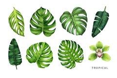 Τροπικό σύνολο Πράσινα φύλλα και λουλούδι ορχιδεών στοκ εικόνα