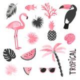 Τροπικό σύνολο στα ρόδινα και μαύρα χρώματα Φλαμίγκο, toucan, καρπούζι, φοίνικας, φύλλα απεικόνιση αποθεμάτων